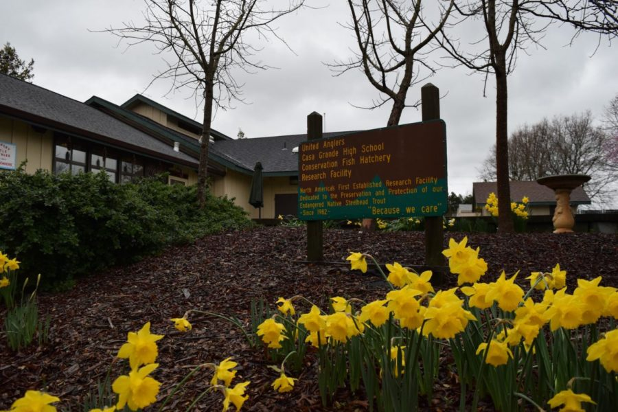 Daffodils line the entrance to the United Anglers Hatchery on campus.