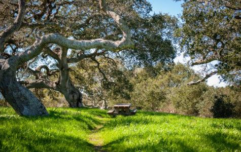 A small, quaint picnic area located on the Savannah Trail.