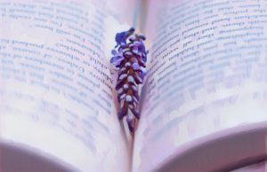 "Review: ""Hyacinthus Hurricane"